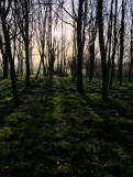 Beech Copse | The Clumps